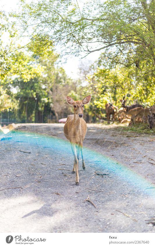 Reh im Gegenlicht Natur Baum Tier Wald Tierjunges Herbst Wiese Holz Stimmung wild Wildtier Säugetier Horn Atmosphäre gepunktet Hirsche