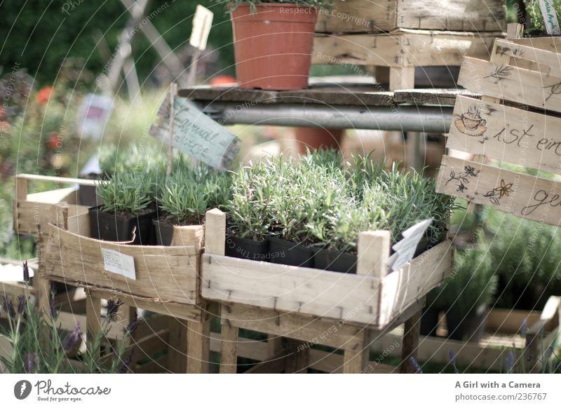 Die Provence nach Hause holen Pflanze Sommer Nutzpflanze Topfpflanze Lavendel Kiste Marktstand Blumentopf Schilder & Markierungen Außenaufnahme