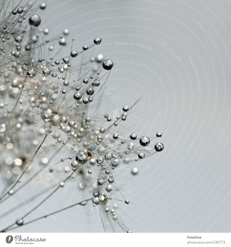 Silberhauch war hier! ;-) Himmel Natur Wasser Pflanze Umwelt hell nass Wassertropfen Urelemente Tropfen Tau Wolkenloser Himmel Makroaufnahme