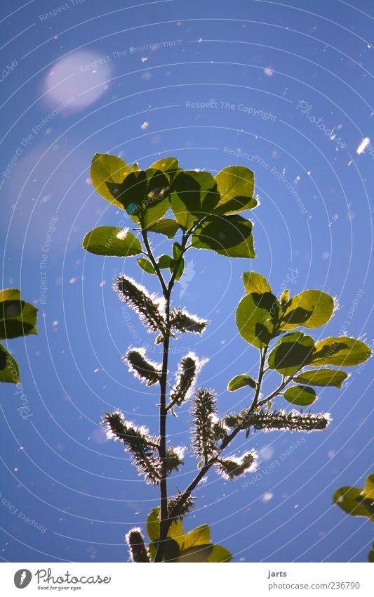 """"""""""""""""""""""""""""""""""""""""""""""""""""""" Umwelt Natur Pflanze Himmel Frühling Schönes Wetter Blüte fliegen leuchten frei natürlich Schweben Farbfoto Nahaufnahme Menschenleer"""