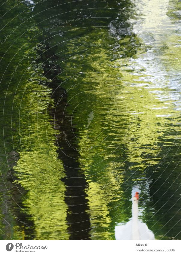 Schwan Natur Wasser Baum Flussufer Teich See Bach Tier Schwimmen & Baden Wasserspiegelung Farbfoto mehrfarbig Außenaufnahme Menschenleer Reflexion & Spiegelung