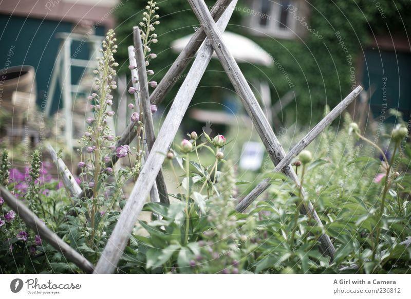 kitchen garden Natur Pflanze Sommer Blume Haus Garten Blüte Gebäude Stil Wachstum Häusliches Leben Dekoration & Verzierung Lifestyle Sträucher Sammlung