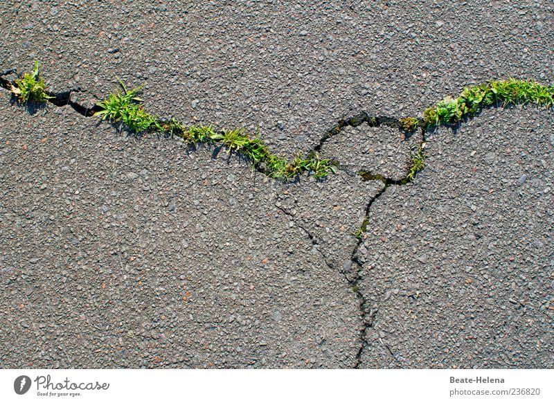 Mir wurden Flügel verliehen - und ich startete durch alt grün Pflanze Straße Frühling Gras grau Kraft Beginn Wachstum Macht Asphalt Straßenbelag Riss Zerstörung