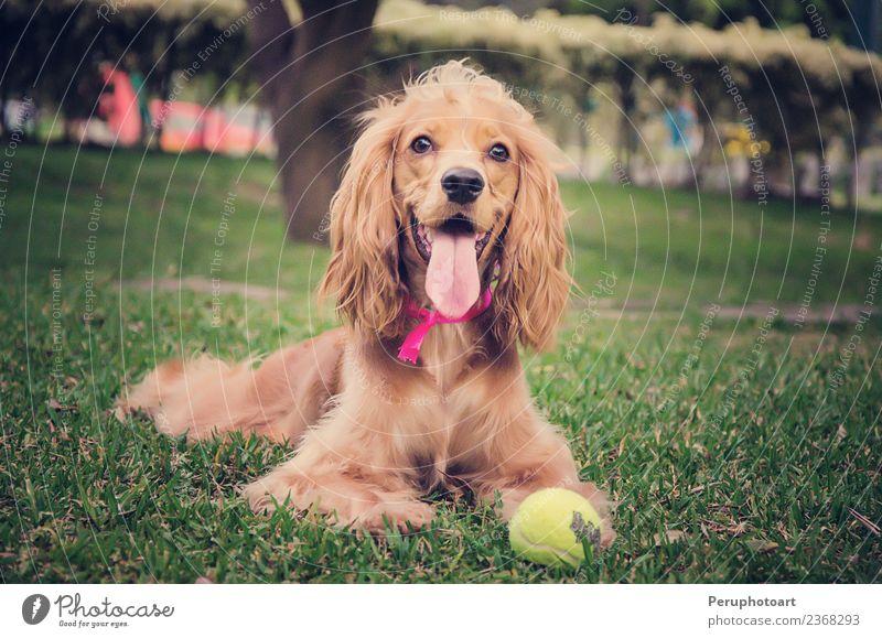 Natur Hund Sommer schön grün weiß Tier Freude natürlich Gras Glück Garten braun Park Aussicht sitzen