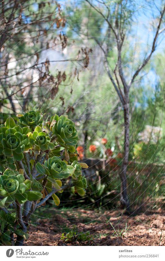 Liegestuhlfoto Natur Pflanze Sommer Landschaft Frühling Erde Wachstum Sträucher Blühend Garten Beet mediterran Jahreszeiten Sukkulenten