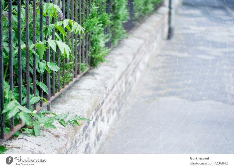 Spaziergang Natur Pflanze Sträucher Grünpflanze Garten Straße Wege & Pfade Mauer Mauerpflanze Vorgarten Bürgersteig Fluchtlinie Menschenleer Zaun Farbfoto