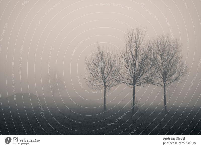 1+3 Umwelt Natur Landschaft Luft schlechtes Wetter Nebel Baum Wiese Feld dunkel gruselig trist Vergänglichkeit Schwarzweißfoto Außenaufnahme Menschenleer