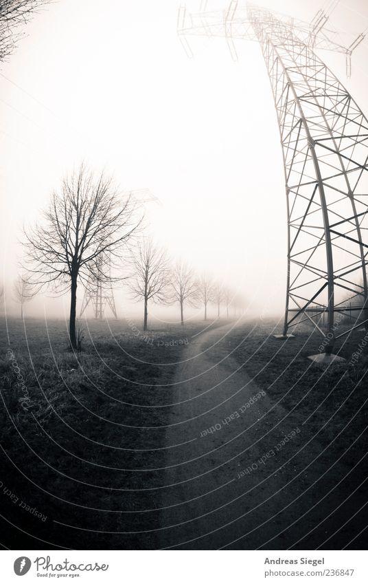 Der Weg Natur Baum Einsamkeit ruhig Umwelt Landschaft Wiese kalt Wege & Pfade Feld Nebel Energiewirtschaft trist Technik & Technologie Strommast schlechtes Wetter