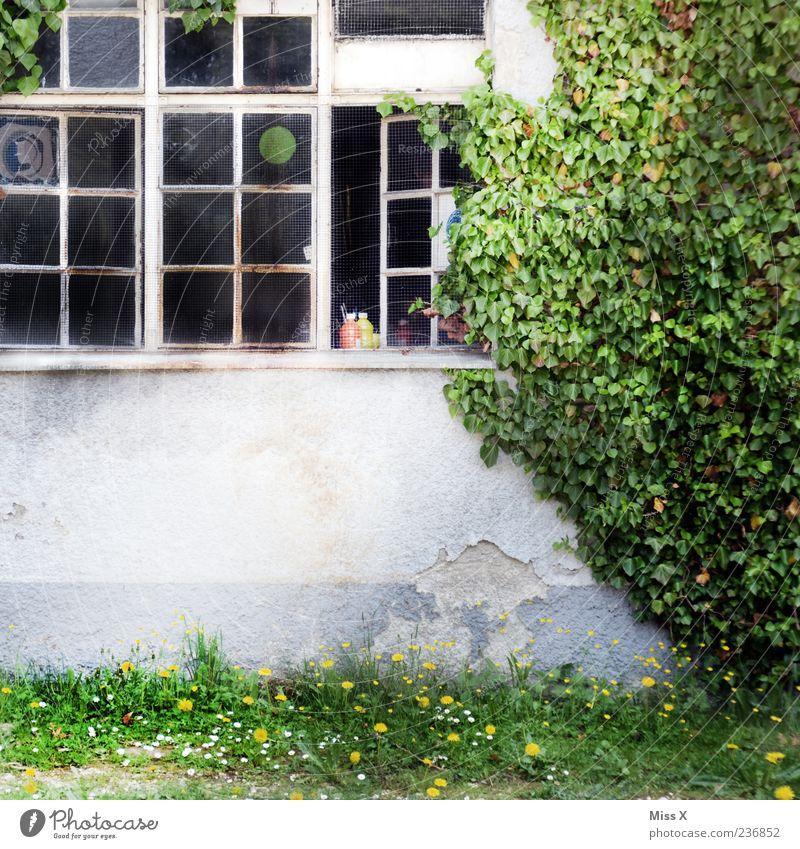 olle Fabrik Pflanze Efeu Haus Fenster alt Hof Ranke Farbfoto Außenaufnahme Menschenleer Textfreiraum unten Gebäude offen Fassade Wachstum Gras Sträucher