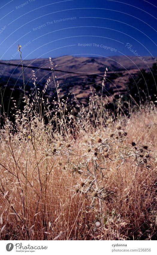 Sonne satt Natur Ferien & Urlaub & Reisen Sommer Einsamkeit ruhig Ferne Erholung Umwelt Landschaft Wiese Leben Berge u. Gebirge Freiheit Gras träumen Horizont