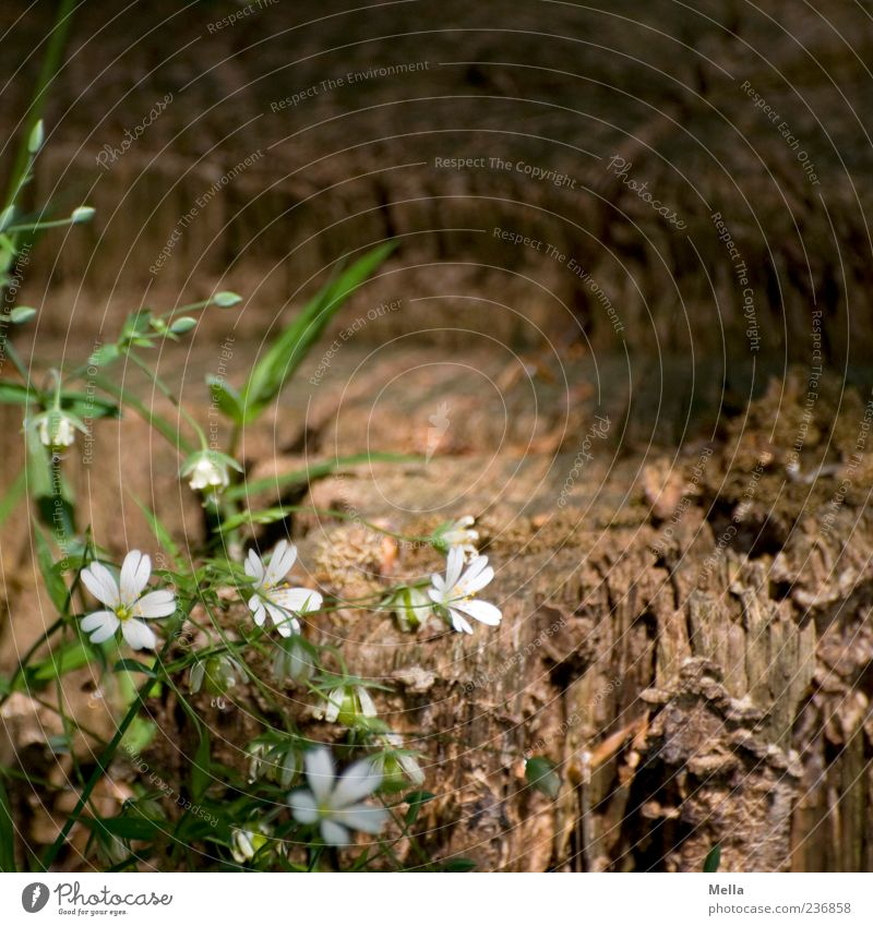 Waldwoche Natur weiß grün schön Pflanze Sommer Blume Umwelt Holz Frühling Gras Blüte braun natürlich Wachstum