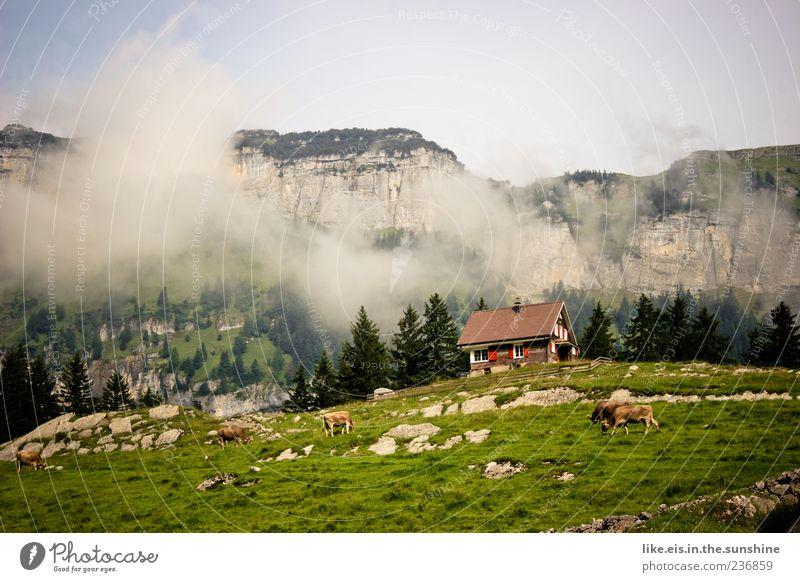 postkartenmotiv Natur Baum Ferien & Urlaub & Reisen Sommer Wolken Einsamkeit ruhig Ferne Erholung Umwelt Landschaft Berge u. Gebirge Freiheit Gras Wetter Felsen