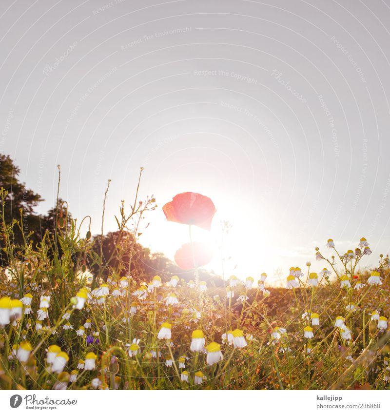 montag Lifestyle Sommer Sonne Umwelt Natur Landschaft Pflanze Luft Wolkenloser Himmel Sonnenaufgang Sonnenuntergang Sonnenlicht Klima Wetter Schönes Wetter Gras