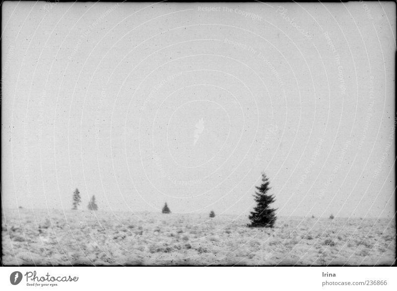 und die liebe Seele hat Ruh Natur Ferien & Urlaub & Reisen Baum Einsamkeit Winter ruhig Landschaft Erholung Ferne Zufriedenheit trist Unendlichkeit analog demütig Hochmoor