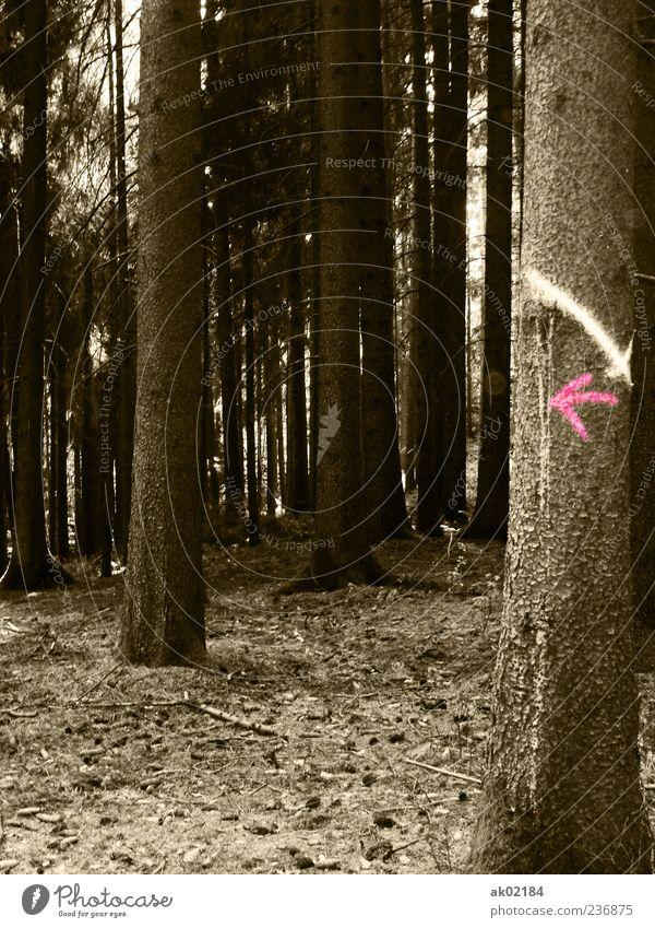 Richtungswechsel Stil Erholung ruhig Ferien & Urlaub & Reisen Ausflug Ferne Freiheit Umwelt Natur Landschaft Erde Dürre Pflanze Baum Nutzpflanze Wald