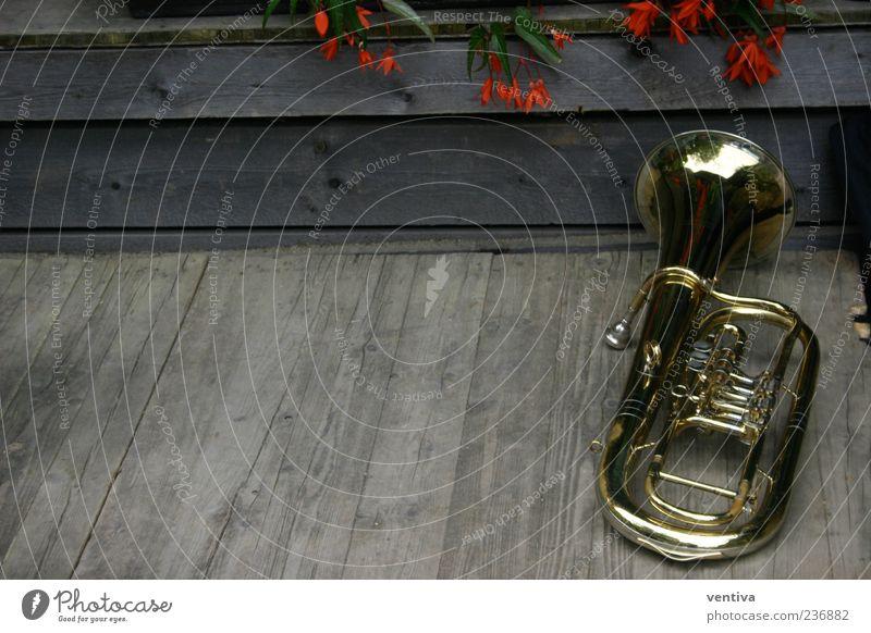 Tuba Pflanze Blume Holz Metall Musik gold Kitsch Musikinstrument Holzfußboden abgelegen Krimskrams Blasinstrumente