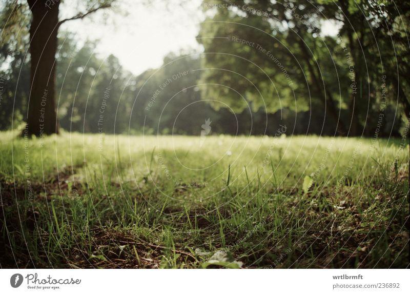 Lichtung Natur Ferien & Urlaub & Reisen Pflanze grün Sommer weiß Sonne Baum Erholung Einsamkeit Landschaft Blatt Ferne Umwelt gelb Wiese