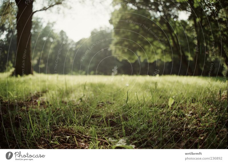 Lichtung Natur Landschaft Pflanze Sonne Sonnenlicht Sommer Schönes Wetter Baum Gras Blatt Park Wiese ästhetisch natürlich gelb grün weiß Zufriedenheit