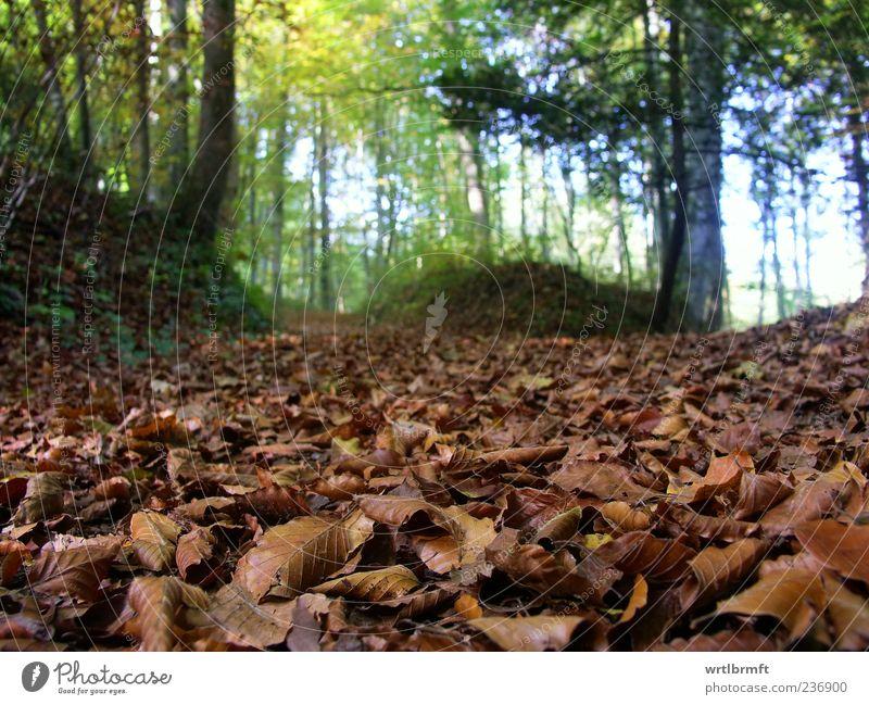 Waldszene Ausflug wandern Natur Landschaft Pflanze Erde Herbst Buchenwald blau braun gelb grün Erholung Umwelt Waldboden Blatt Laubwald Fußweg Erholungsgebiet