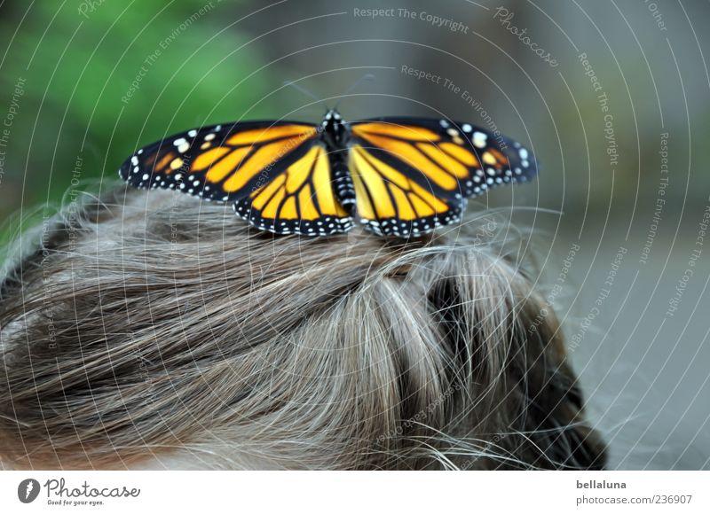 Punktlandung Mensch Kind Mädchen Kindheit Leben Haare & Frisuren 1 Tier Wildtier Schmetterling Flügel elegant fantastisch schön braun grün schwarz weiß