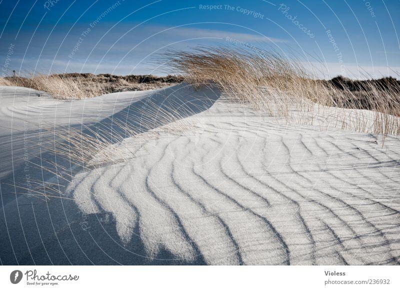 Spiekeroog | ...wind creation Natur Landschaft Sand Strand Nordsee atmen Bewegung frisch blau Leben Ferien & Urlaub & Reisen Düne Dünengras Wellenform