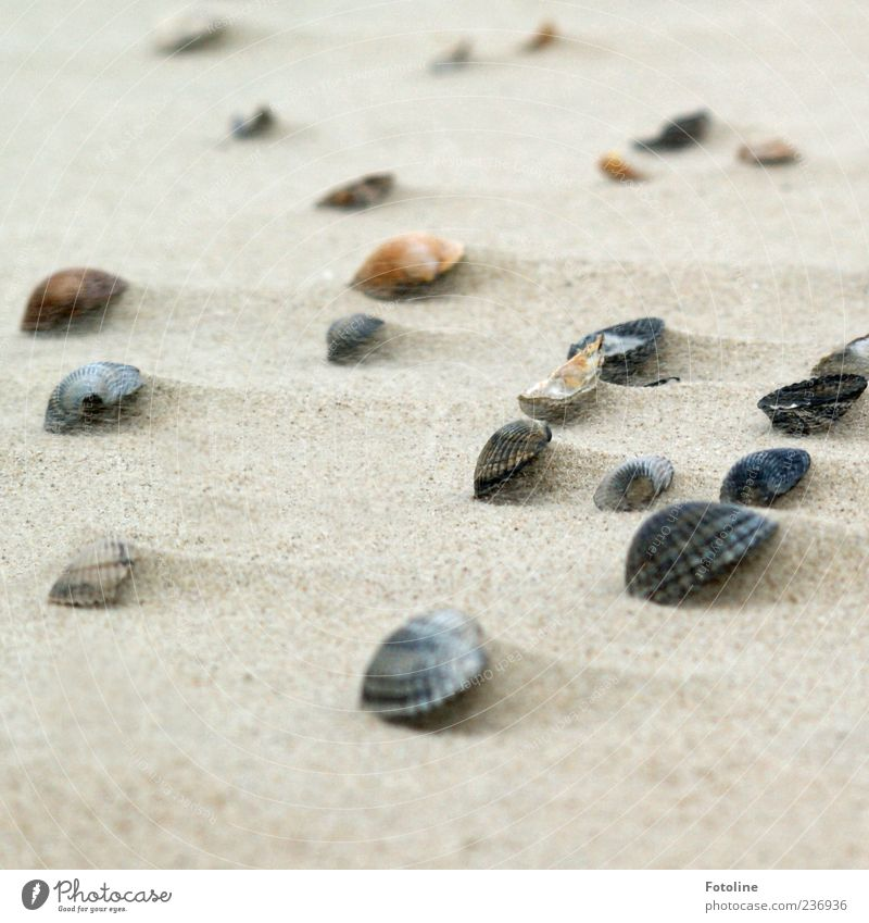 Spiekeroog   Strandschätze Umwelt Natur Urelemente Erde Sand Nordsee Muschel hell natürlich Strandgut viele Farbfoto Gedeckte Farben Außenaufnahme Nahaufnahme