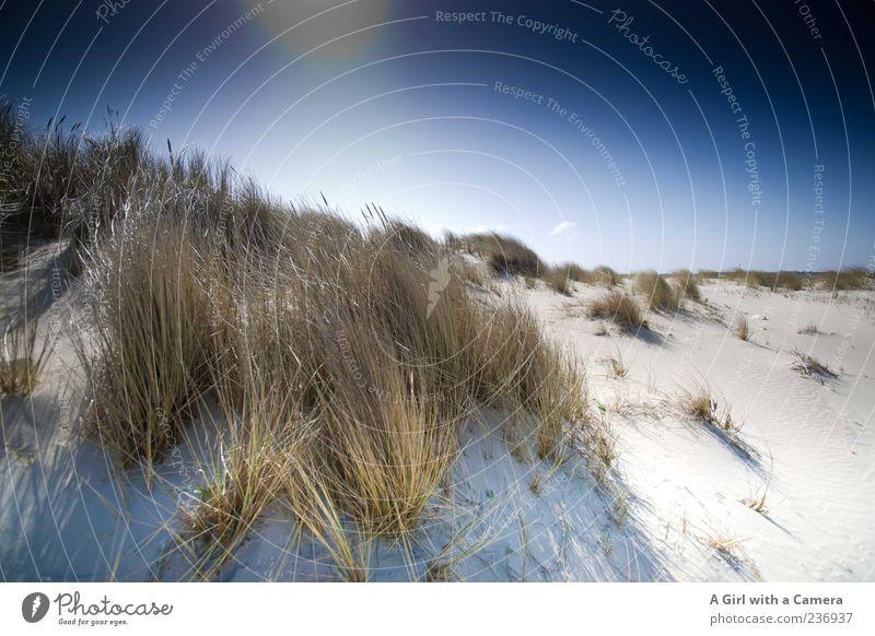 Spiekeroog l it could have taken forever Strand Meer Wolkenloser Himmel Sonne Sommer Wetter Schönes Wetter Wind Pflanze Gras Insel gigantisch glänzend natürlich