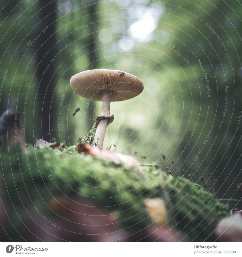 Märchenwald Umwelt Natur Tier Sommer Herbst Pflanze Pilz Wald Freude ruhig mushroom Moos Sammlung Farbfoto Außenaufnahme Menschenleer Tag Unschärfe
