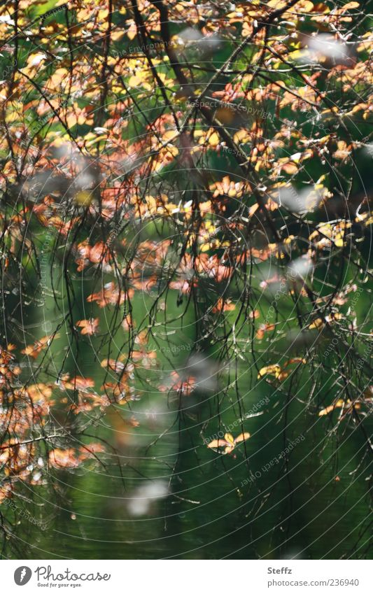 Lichtblätter Umwelt Natur Pflanze Sonnenlicht Sommer Herbst Schönes Wetter Blatt Zweig Ast Blattunterseite natürlich braun grün Stimmung Warmherzigkeit Farbe