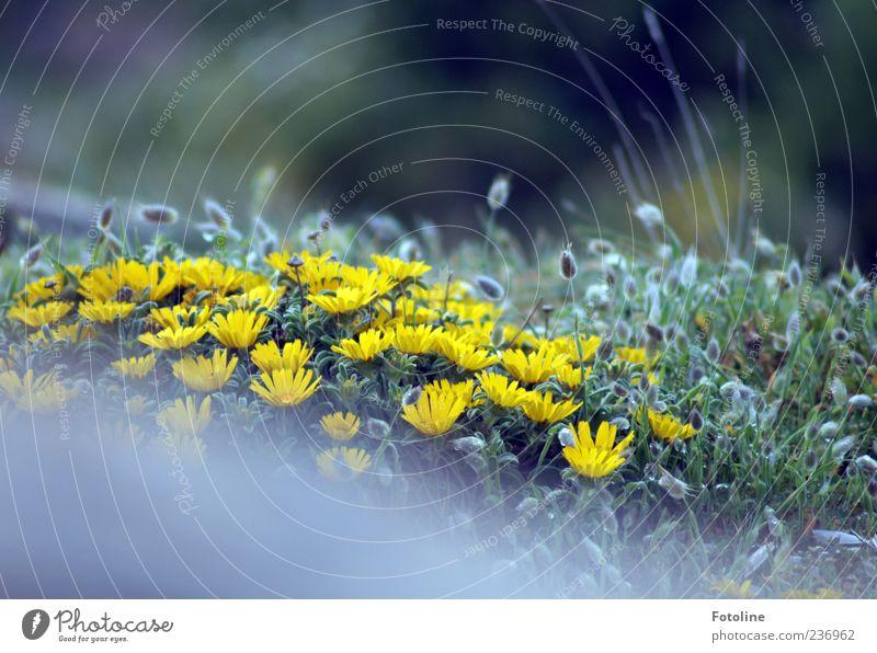 Blütenpracht Umwelt Natur Pflanze Frühling Blume Gras Blatt Wildpflanze Garten hell gelb grün Blühend Blühende Landschaften Blütenblatt Farbfoto mehrfarbig