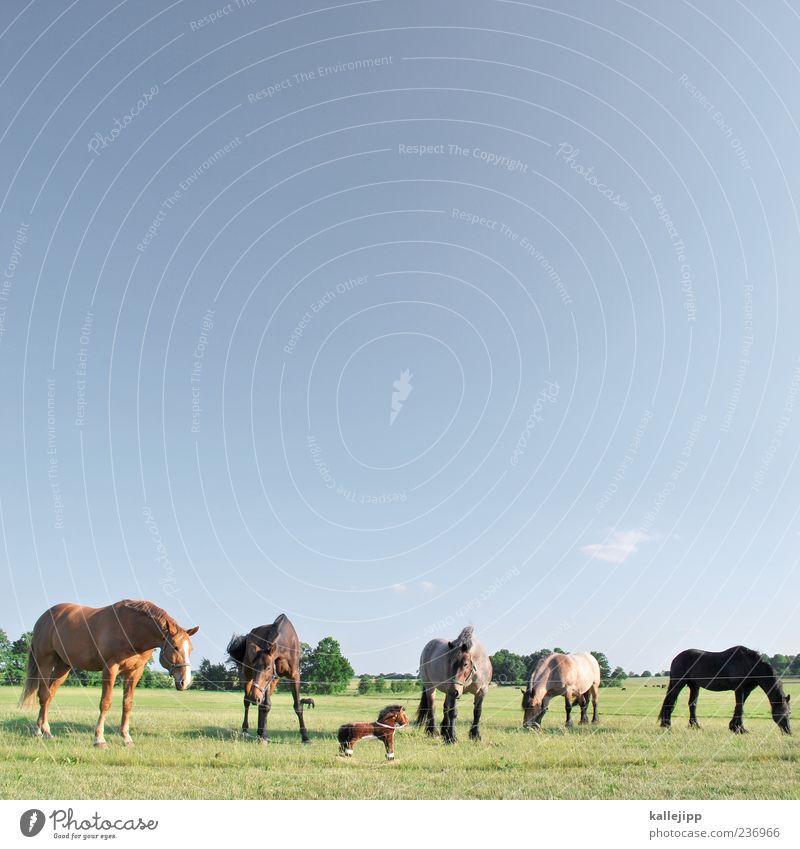 der besuch der kleinen dame Himmel Natur Tier Wiese Horizont groß Tiergruppe Pferd Neugier Schönes Wetter Spielzeug Weide falsch Wolkenloser Himmel fremd