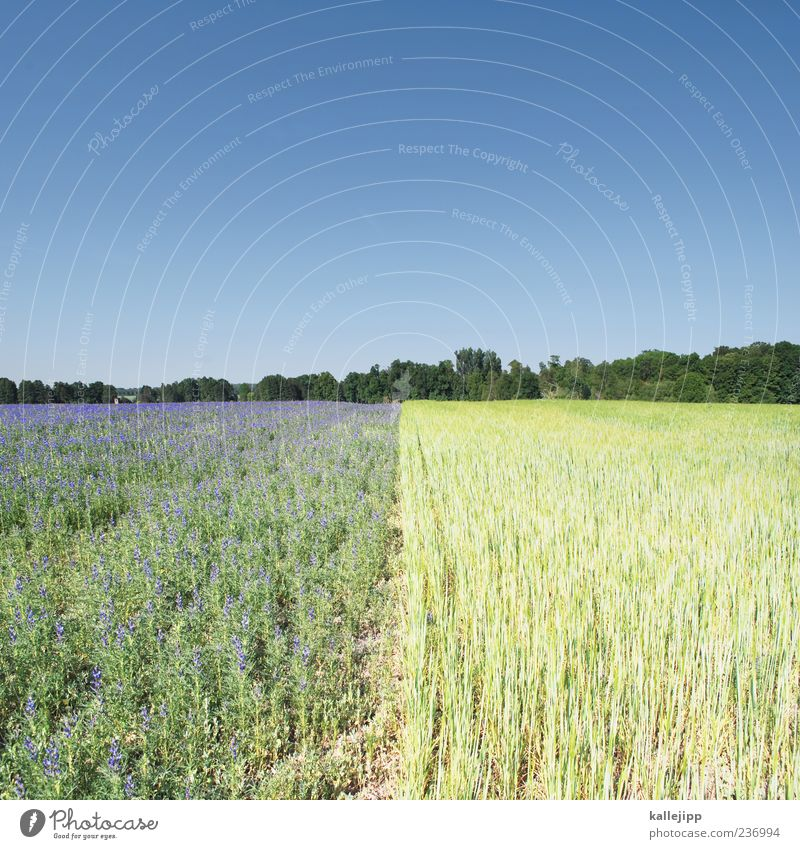 feldlinien Arbeit & Erwerbstätigkeit Wirtschaft Landwirtschaft Forstwirtschaft Umwelt Natur Landschaft Pflanze Erde Himmel Wolkenloser Himmel Baum Blume
