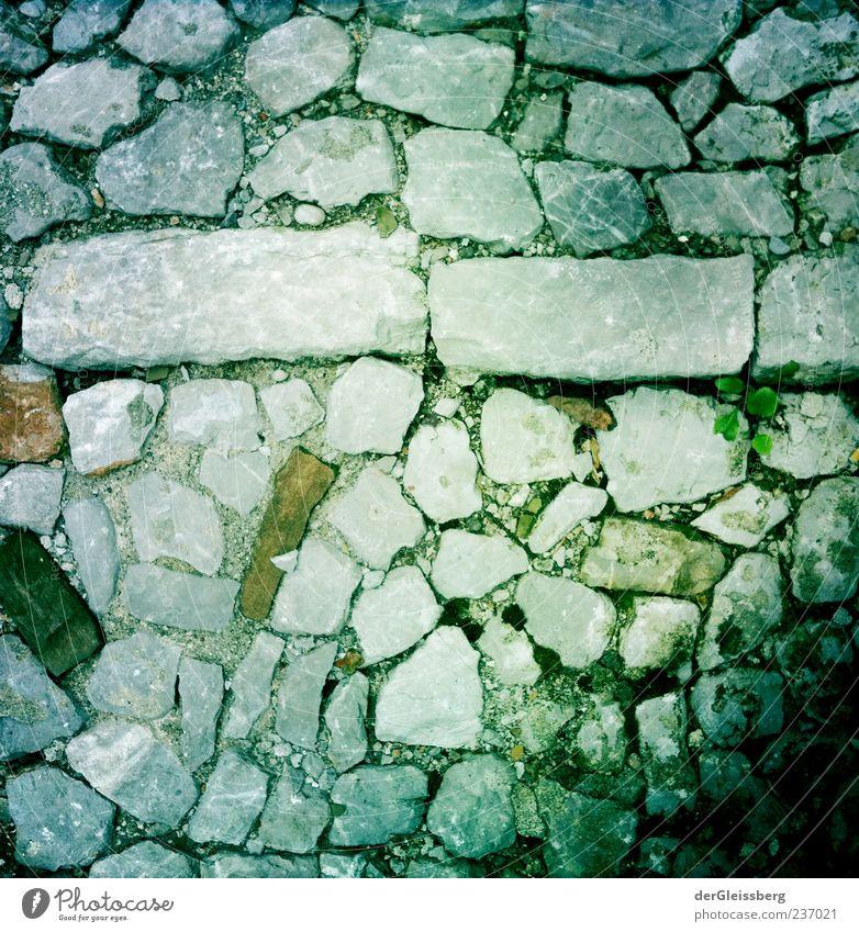 Steinerne Wege 2 Straße Wege & Pfade grau grün Pflanze Pflastersteine Kopfsteinpflaster Rechteck Farbfoto Vogelperspektive Menschenleer