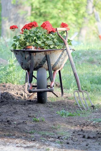 Pflanze Blume Landschaft Garten Erde Beginn ästhetisch Spielfeld Ackerbau anstrengen Gartenarbeit Gabel Arbeit & Erwerbstätigkeit Umwelt Topfpflanze