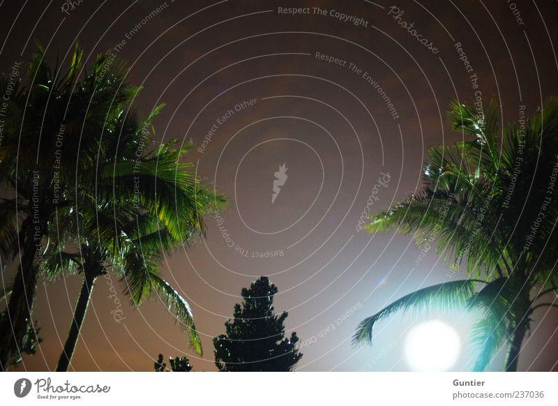 palms heaven :) Umwelt Natur Himmel Nachthimmel Mond Vollmond Sommer Baum exotisch Palme blau braun grün schwarz weiß Farbfoto mehrfarbig Außenaufnahme