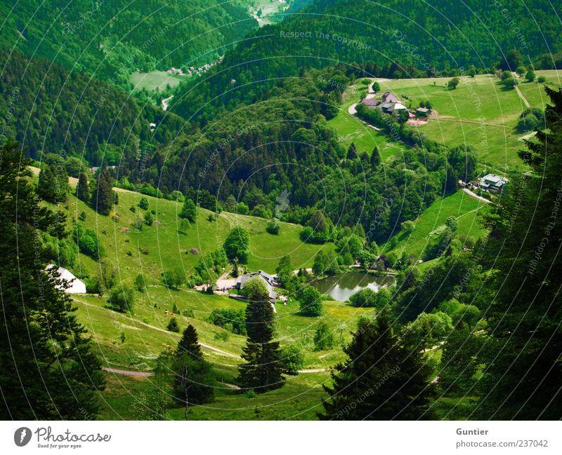 runtergucken Natur weiß grün Baum Sommer schwarz Wald Wiese Berge u. Gebirge Wege & Pfade Schönes Wetter Aussicht Landwirtschaft Teich Tal Nadelbaum
