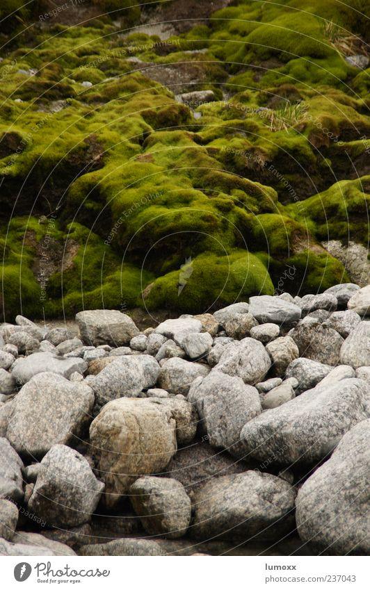des kaisers neue kleider Umwelt Natur Moos Flussufer Norwegen Skandinavien Europa grau grün Farbfoto Außenaufnahme Tag Stein bewachsen Menschenleer