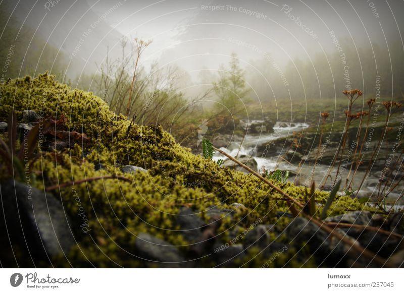 briksdalsbreen Natur Wasser grün Umwelt Landschaft Berge u. Gebirge Stimmung Nebel natürlich nass Reisefotografie Europa Flussufer Moos Norwegen Skandinavien