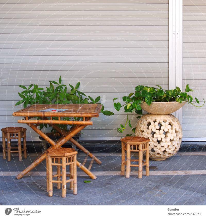 Skatrunde in der Pinkelpause Lifestyle exotisch Sommer Pflanze Blatt Grünpflanze Topfpflanze braun grau grün weiß Tisch Stuhl Vase Blumentopf Bambus Möbel Ton
