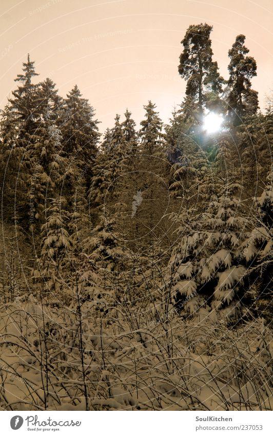 sunny sunny cold cold day Natur Landschaft Sonne Sonnenlicht Winter Schönes Wetter Schnee Baum Wald schwarz Farbfoto Außenaufnahme Tag Licht Sonnenstrahlen