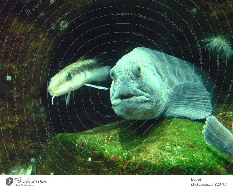 Dick und doof Wasser Meer See Fisch Aquarium Überraschung Höhle