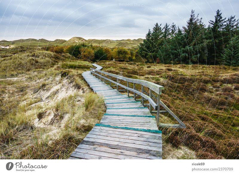 Landschaft in den Dünen auf der Insel Amrum Erholung Ferien & Urlaub & Reisen Tourismus Natur Wolken Herbst Baum Küste Nordsee Wege & Pfade blau Umwelt