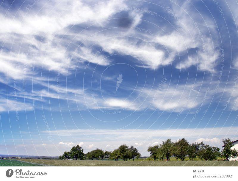 Wettergott mit Wolkengesicht Natur Landschaft Himmel Sommer Klima Schönes Wetter Wind Baum Wiese Feld blau Freiheit Horizont Ferne Streuobstwiese Blauer Himmel