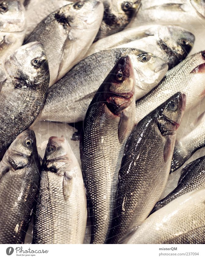 Lecker Fisch. Lebensmittel nass frisch ästhetisch viele lecker Ekel Fischereiwirtschaft roh Schuppen Meeresfrüchte Markt abstrakt Ernährung