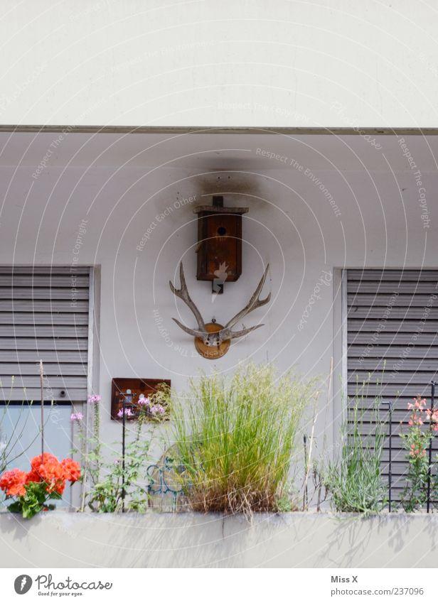 Trautes Heim Häusliches Leben Wohnung einrichten Dekoration & Verzierung Pflanze Topfpflanze Balkon Horn Futterhäuschen Fenster Farbfoto Außenaufnahme