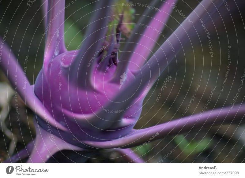 Kohlrabi blau Lebensmittel Gemüse Ernährung Bioprodukte Vegetarische Ernährung Natur Pflanze Nutzpflanze violett Farbfoto Außenaufnahme Detailaufnahme