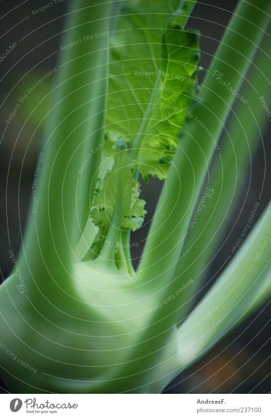 Kohlrabi grün Lebensmittel Gemüse Bioprodukte Vegetarische Ernährung Farbfoto Außenaufnahme Nahaufnahme Detailaufnahme Schwache Tiefenschärfe 1 Menschenleer
