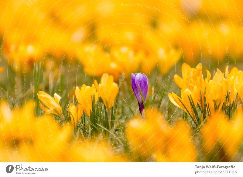 Frühlingslicht Natur Pflanze Schönes Wetter Blume Lebensfreude Frühlingsgefühle Vorfreude Farbfoto Außenaufnahme Menschenleer Textfreiraum oben Tag Licht