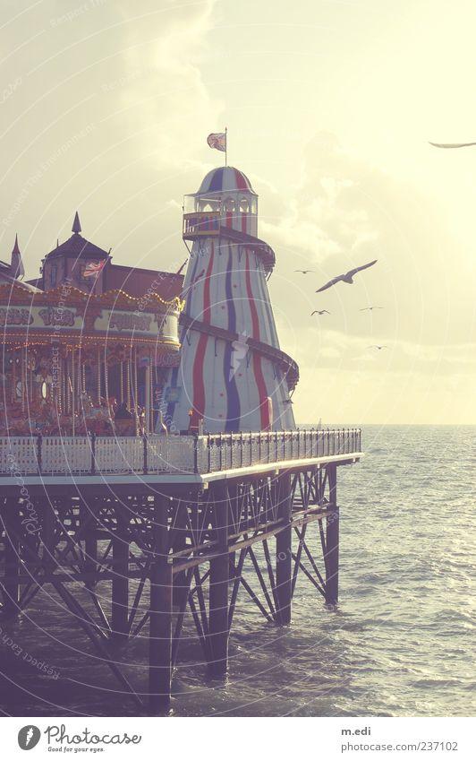 Br-Br-Brighton Meer Strand Ferne Freiheit Küste Horizont Vogel Ausflug Tourismus Kitsch Jahrmarkt Steg Möwe Anlegestelle Sightseeing England