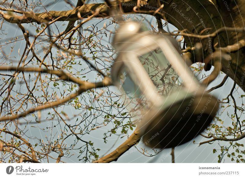 Frühlingsfest Baum Perspektive Dekoration & Verzierung Ast Wolkenloser Himmel hängend Windlicht